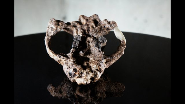 fossil3