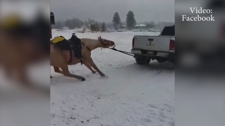horse dragged grand county