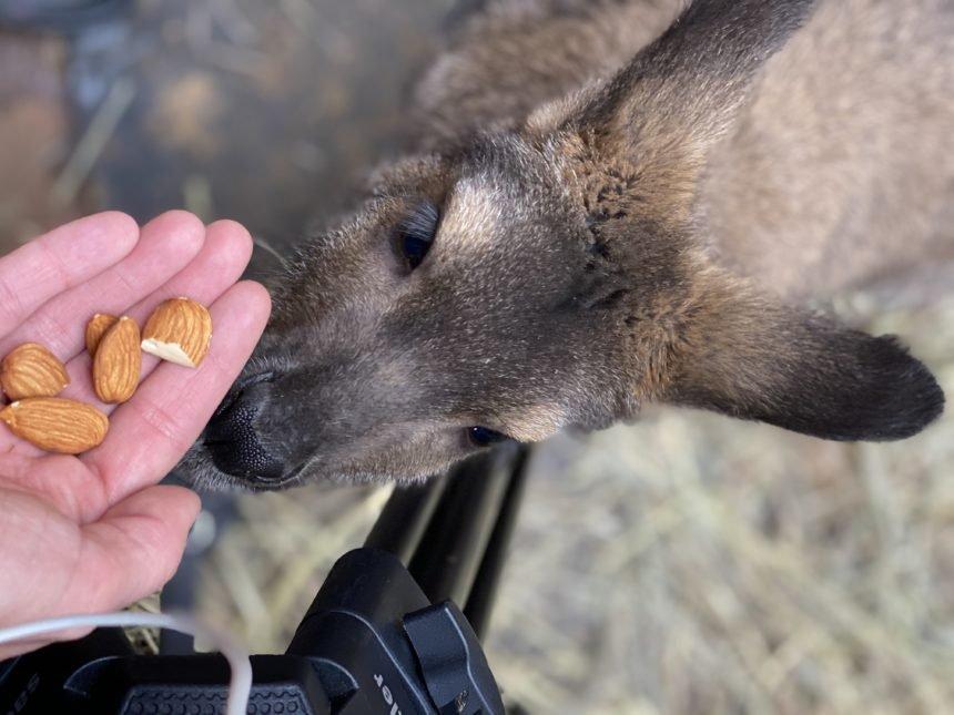 cheyenne mountain zoo wallaby