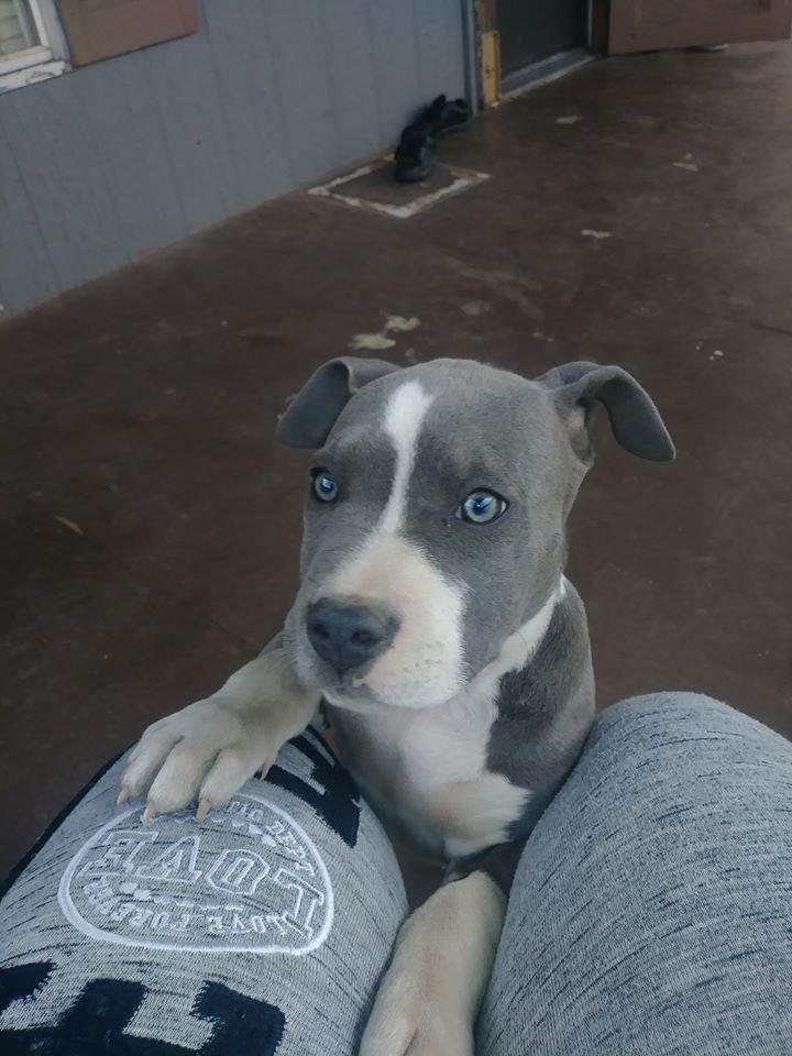 Junior missing puppy