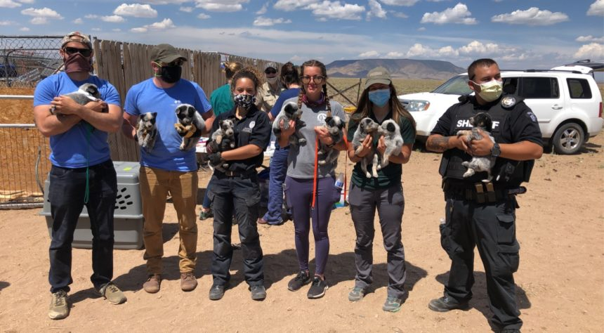 costilla county dogs rescued