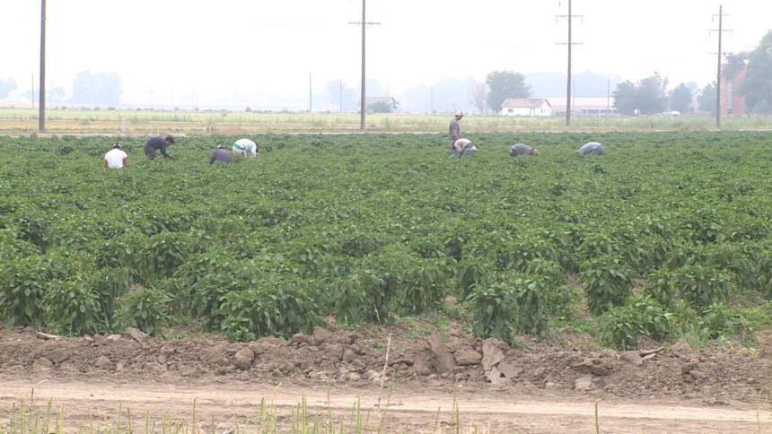 090720 FARMERS PREPARE FOR COLD