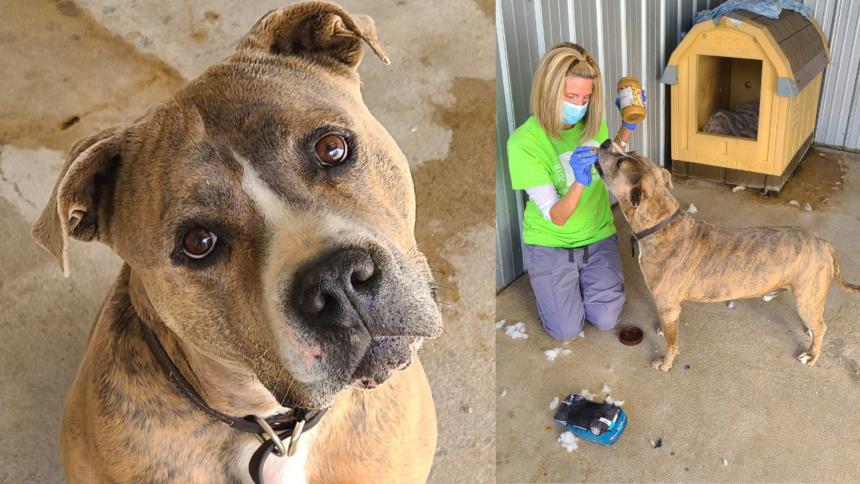 Drools rescue dogs Monte Vista shelter