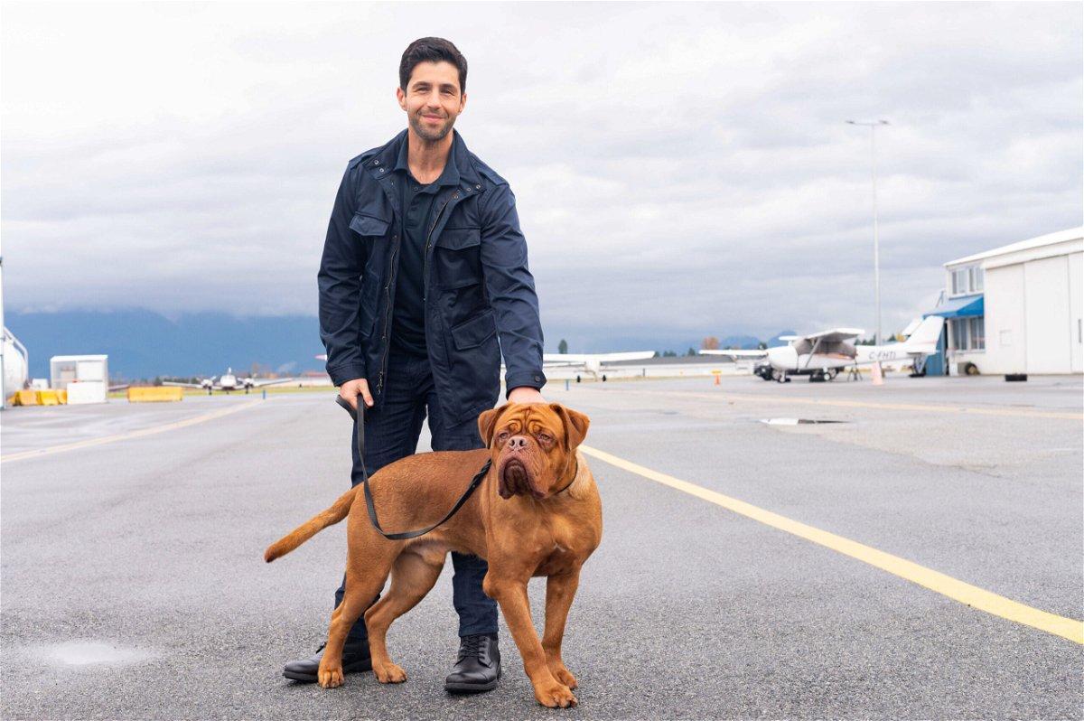 <i>Farah Nosh/Disney+</i><br/>Josh Peck plays a US Marshal who inherits his dad's dog in 'Turner & Hooch.'